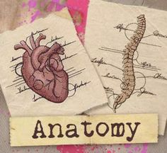 Anatomy (Design Pack) | Urban Threads: Unique and Awesome Embroidery Designs