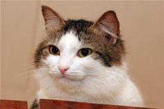 Smug cat.