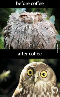 Morning Owl Visit roflburger.com for more funny awesomeness