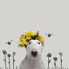 Jimmy Choo: the wonderful bull terrier instagram star!