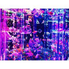 【skmtmk_217】さんのInstagramをピンしています。 《. 流行り乗ってアクアリウム!笑 想像以上に綺麗やった〜✨ ノリで行ってよかった✌🏼️ . #アートアクアリウム #アクアリウム #ニモ #ドリー #発見  #堂島リバーフォーラム #中之島 #福島 #大阪 #金魚 #水槽 #✨ #artaquarium #aquarium #20160823》