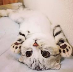 Do you love that nice kitten?