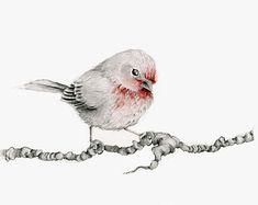 Vogel Zeichnung Bleistift Zeichnung Giclée Fine von ABitofWhimsyArt