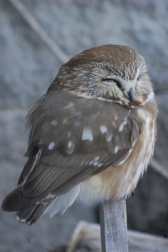 Peaceful Owl ... isn't that what we are all looking for?  Peace