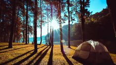 12 beste Campingplätze der Schweiz 2019 - Travel tips - Travel tour - travel ideas Camping Am See, Switzerland Tour, Pine Forest, Going On Holiday, Travel Tours, Travel Ideas, Grand Tour, Holiday Destinations, Van Life