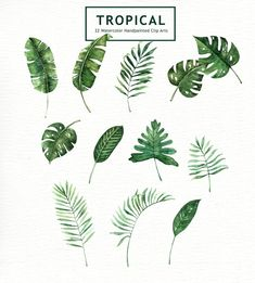 Discover thousands of images about Tropical Leaves Watercolor Clipart by everysunsun on Watercolor Leaf, Animals Watercolor, Watercolor Clipart, Watercolor Flowers, Watercolor Paintings, Watercolor Wedding, Botanical Art, Botanical Illustration, Tatoo Flowers