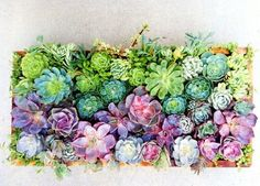 Rainbow Succulent Centerpiece: #succulents are trendy now for a reason! Make this adorable centerpiece.