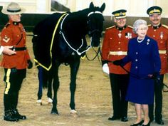 The Queen has received many horses as gifts from other heads of state. Princess Anne, Prince And Princess, Scotland History, Akhal Teke, Royal Life, Kingdom Of Great Britain, Prince Phillip, English Royalty, Save The Queen