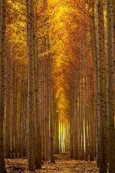 Autumn & Fire