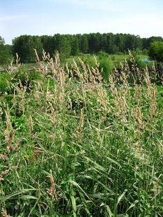 где прикупить травы красноармейск