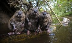 Animal photographs of the year 2014