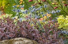 Why should spring get all the glory? Learn the gardening basics of fall planting and find out why this is a prime season for gardening.