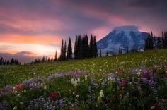 Evening Wildflowers by Doug Shearer on 500px