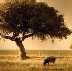 Solo en un lugar de España. ¿Adivinas cuál? Only in a place in Spain. Do you know wherr?
