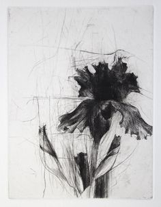 yama-bato:  Jake Muirhead  beautiful lines