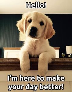 """Brain Training For Dogs that develops your Dog's """"Hidden Intelligence"""" To eliminate bad behavior and Create the obedient, well-behaved pet of your dreams Cute Animal Memes, Cute Funny Animals, Cute Baby Animals, Funny Dogs, Animals And Pets, Puppy Care, Pet Puppy, Cute Puppies, Cute Dogs"""