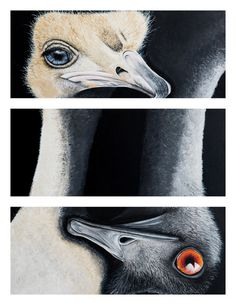 16 best scienceart images on pinterest art pieces artworks and emu