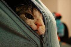 Peek a boo - kitty cat
