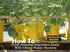 How To Grow Amazing Vegetables Easily With Cheap Plastic Buckets
