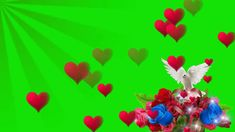 butterfly heart video effect green screen love effects (star video effect) Green Screen Video Effect, Green Screen Video Backgrounds, Green Background Video, Motion Backgrounds, Flower Backgrounds, Frame Background, Wedding Background Images, Light Background Images, Studio Background Images