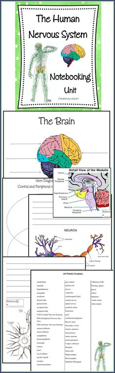 NEW DOWNLOAD: The Human Body Nervous System Notebooking Unit! Created for 5th-12th grades, This 62 page notebooking unit is a perfect compliment to any curriculum based study on the nervous system (OR) to use completely independent as a research assignment/project! Download Club members can download @ http://www.christianhomeschoolhub.com/pt/Brain--Nervous-System--Neuroscience-Teaching-Materials/wiki.htm *Full Preview available before download *