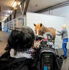 Ypäjä-sarjan TV-mainoksen kuvauksissa vuoden 2012 kanavakonsultti Maria Ainamo otti kontaktia hevoseen.
