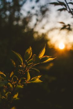 Nature Photography by Lauren E. Lakeberg photography Sunset at the Prairie Vintage Nature Photography, Nature Photography Flowers, Aesthetic Photography Nature, Sunset Photography, Landscape Photography, Nature Photography Quotes, Photography Ideas, Winter Photography, Flowers Nature