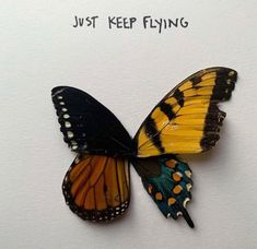 some days are harder than others. just keep flying. life is beautiful, enjoy the ups and downs. You are so loved🦋 tringsby Wrestling Memes, Dawn News, Vera Bradley Patterns, Without Me, Perspective On Life, Unique Words, Life Thoughts, Ups And Downs, Good Vibes Only