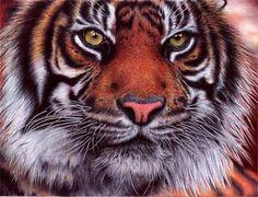 Animal Portrait Drawings by Samuel Silva | Cuded