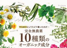 完全無農薬10種類のオーガニック成分 Green Beans, Herbs, Herb, Medicinal Plants