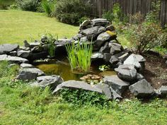 Garden Pond Fish Water features add interest to a yard