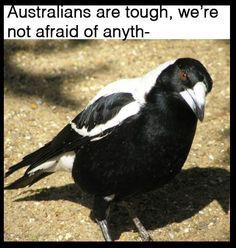 Just 100 Really Fucking Funny Memes About Australia Funny pictures Australian Memes, Aussie Memes, Best Memes, Dankest Memes, Jokes, Funny Images, Funny Pictures, Bug Images, Australia Funny