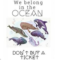 seriously you guys don't support sea world – More at http://www.GlobeTransformer.org