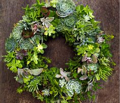 Poppytalk - The beautiful, the decayed and the handmade: Holiday Inspiration: Succulents, Air Plants and Flora Grubb