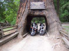 Chandelier Drive-Thru Tree in Leggett, CA | California ...