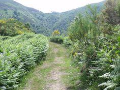 Camino de Santiago  por #Asturias (Camino del Salvador) Bosque de Valgrande - Pajares #España