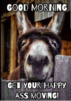 fat animals in a farm. a funny animation about a funny farm and its fat animals fette tiere auf dem bauernhof, eine sehr lustige animation very funny cartoon Farm Animals, Animals And Pets, Funny Animals, Cute Animals, Wild Animals, Cute Donkey, Mini Donkey, Donkey Funny, Baby Donkey