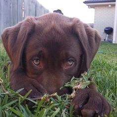 """""""You don't need to cut the grass. I'll just chew it for you."""""""