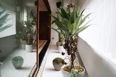 WORKS | SOLSO architectural plant & farm