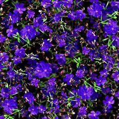 Be Diff - Estampas florais   Floral 3D by Paola