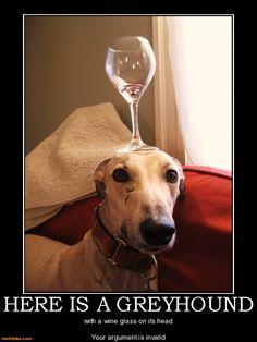 Greyhound indescribable