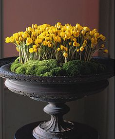 Photo by Dana Gallagher. Bulbs' yellow bright flowers and moss: I would rather have them in a ceramic bonsaï low-sided pot or tray, but it's  a lovely idea anyway.