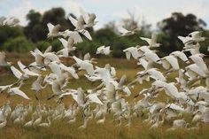 Le delta de l'Okavango : Unesco : les derniers sites inscrits sur la liste du Patrimoine mondial - Linternaute
