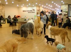 The dog cafe in #Seoul #Korea... Yes you sit down with a cup of coffee and pet dogs all day!!! This is one of my favorite things about living in Seoul!