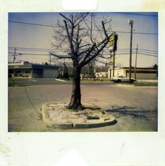 Robert Frank, Untitled, from Painkiller, an exhibition of 48 Polaroid photographs taken between the 1970s and the 2010s in January 2012 at the Blue Sky gallery in Portland