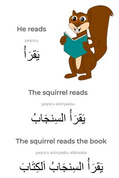 "Learning Arabic MSA (Fabienne) The sentence ""The squirrel reads the book"" in Arabic."