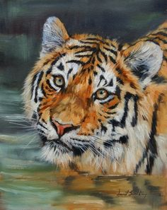 David Stribbling tiger oil painting