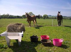 You don't need to get a boring non-horsey job this summer...  http://eventingconnect.today/2016/07/01/fridays-five-mini-businesses-any-rider-can-start-to-earn-some-extra-cash/