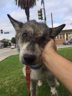 Ils sauvent un chien abandonné d'une mort certaine, et s'aperçoivent que... ce n'est pas un chien