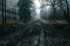 wanderthewood: New Forest, Hampshire, England bymilouvision